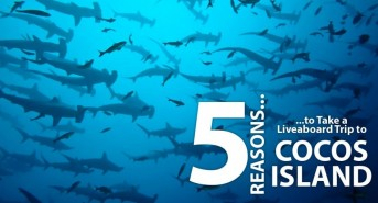 5-Reasons-to-Take-a-Liveaboard-Trip-to-Cocos-Island_fb_v1.jpg